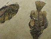حفريات تظهر نهوضا سريعا للحياة على الأرض بعد انقراض جماعى قديم