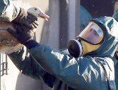 """الزراعة: تحصين 12 مليون طائر ضد إنفلونزا الطيور وخلو مصر من """"اللسان الأزرق"""""""