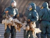 """""""الزراعة الكويتية"""" تفرض حظرا على استيراد الطيور من ماليزيا وألمانيا"""