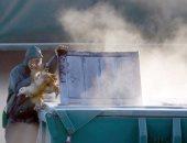 """""""الزراعة"""" تعلن اكتشاف بؤرتين لأنفلونزا الطيور بالفيوم والدقهلية.. لجان تقصى نشط بمزارع الدواجن والأسواق والتربية المنزلية لمواجهة المرض.. سحب 340 عينة بـ45 موقعا للطيور المهاجرة بـ 8 محافظات بحثا عن عترات جديدة"""