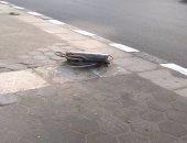 شكوى من كابلات كهرباء مكشوفة على رصيف كورنيش الشاطبى فى الإسكندرية