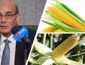 """هل تعود """"اللحمة لموائد المصريين"""".. """"الزراعة"""" تراهن على نجاح مشروعى """"البتلو"""" و""""الذرة الصفراء"""".. والمتحدث الرسمى للوزارة: انتظروا النتائج خلال 10 أشهر.. وخبير: إحكام الرقابة وزيادة المعروض من الأعلاف يخفض الأسعار"""