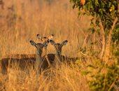 """غدا..العالم يحيى اليوم العالمى للحياة البرية تحت شعار """"استمعوا إلى الأصوات الشابة"""""""