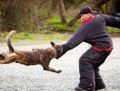"""فيديو معلوماتى.. """"لو عضك كلب"""".. 5 إسعافات أولية لا تنساها"""