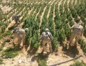 الجيش الثانى يدمر 8 مزارع بانجو وسيارة مفخخة للعناصر الإرهابية بشمال سيناء