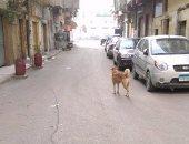 """شكوى من انتشار الكلاب الضالة فى شوارع """"بولكلى"""" بالإسكندرية"""