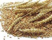 مؤسسة الحبوب السعودية تشترى 735 ألف طن من القمح الصلد