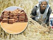 """""""زراعة المنوفية"""": مستعدون لموسم القمح ونتوقع زيادة الإنتاج إلى ١٧٠ ألف طن"""