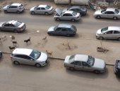 الكلاب الضالة مشكلة تؤرق أهالى شارع مكرم عبيد بمدينة نصر