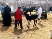 """تعرف على 10 إجراءات تتخذها """"الزراعة"""" لحماية الماشية من الحمى القلاعية"""