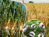 فول الصويا والذرة يتصدران قائمة السلع الأكثر استيرادا يناير الماضى