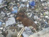 بالفيديو.. زبالة وخرفان بجوار قصر نعمة الأثرى بطريق المرج