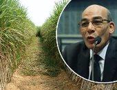للمزارعين.. تعرف على الضوابط الجديدة لزراعة محصول القصب × 7 معلومات