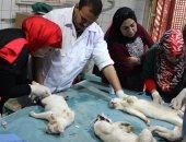 """بالصور.. """"الزراعة"""" تستعين بطبيب أمريكى لإخصاء قطط حديقة حيوان الجيزة"""