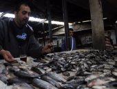 طرح 13 طن أسماك بمنافذ مدينة طور سيناء بسعر 4 جنيهات للكيلو