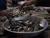 صحة المنيا تعدم 666 كيلو من الأسماك واللحوم وتحرر 171 محضراً