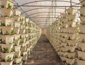 محافظ الإسماعيلية: الانتهاء من 55 صوبة زراعية بقرية الأمل ضمن المرحلة الأولى