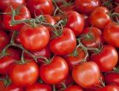 روسيا وتركيا تتفقان على توريد 50 ألف طن من الطماطم التركية للسوق الروسية