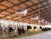 """""""عبور لاند"""" تنشئ مزرعة لتربية الماشية باستثمارات 115 مليون جنيه"""