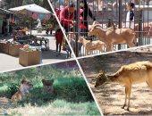الزراعة: عروض بالمتحف الحيوانى بالجيزة لزوار شم النسيم