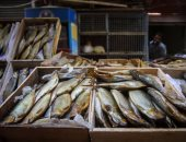 """نصائح """"الزراعة"""" للحد من مخاطر تناول الفسيخ فى شم النسيم.. """"الخدمات البيطرية"""": حزمة إرشادية صحية عن شراء الأسماك المملحة وإعدادها.. 10 شروط للتأكد من صلاحياتها.. 11 علامة تكشف فسادها.. وحملات مكثفة على الأسواق"""