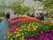 الزراعة: تأجيل الافتتاح الرسمى معرض زهور الربيع بحديقة الأورمان بسب سوء الطقس