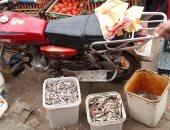 بالصور.. ضبط أسماك ومنتجات غذائية فاسدة بمركز أهناسيا فى بنى سويف