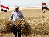 موسم حصاد القمح بالإسماعيلية والتشغيل الفعلي لصوامع القنطرة شرق