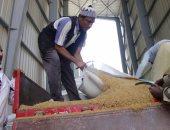مصر تسعى لشراء كمية غير محددة من القمح للشحن 11-20 ديسمبر