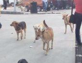 تداول فيديو لسيدة استنشقت رائحة السم المستخدم فى القضاء على الكلاب الضالة