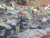 بالصور.. انتشار القمامة فى منطقة مسابك بشتيل بالجيزة