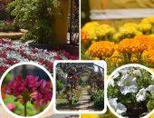 لكل لون معنى.. مهرجان الزهور يخطف أنظار زوار حديقة الأورمان