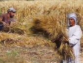نقابة الفلاحين بدمياط تحتفل بحصاد القمح فى الحقول الإرشادية بفارسكور
