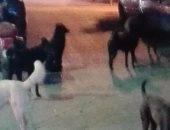 شكوى من انتشار الكلاب الضالة بشارع الحرية بمنطقة بشتيل