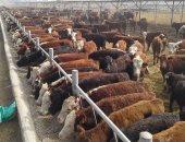 اليوم.. مؤتمر نقابة الأطباء البيطريين يناقش مشاكل الثروة الحيوانية