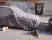 شكوى من انتشار الكلاب الضالة بشارع اللواء عبد المنعم واصل بالإسكندرية