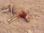 احترس.. الغرامة والحبس عقوبة قتل الحيوانات دون مبرر