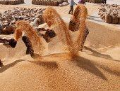 مصر تسعى لشراء كمية غير محددة من القمح للشحن فى فبراير