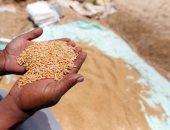 استلام تقاوى القمح والإردب 725 جنيه بدرجة نقاوة 100% استعداد للموسم الجديد