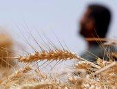 الخدمات الزراعية تنهى استلام التقاوى الشتوية وتجهيزها بمحطات الغربلة