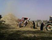 زراعة الوادى الجديد: انتهاء حصاد 185 ألف فدان قمح وتوريد 30 ألف طن للصوامع