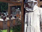 بالفيديو .. لحياة زوجية سعيدة.. لدغات النحل تعزز القدرة الجنسية
