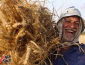 """""""التموين"""" تعلن استلام 2 مليون و 900 ألف طن قمح من المزارعين"""
