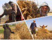 """""""التموين"""" تعلن استلام 2 مليون و600 ألف طن قمح من المزارعين"""