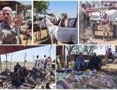 سوق الحمير.. أطيب الكائنات مهددة بسبب الذبح