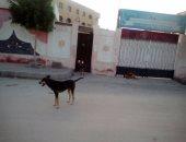 فيديو.. الكلاب الضالة تحاصر سكان مدينة العبور.. والأهالى يشتكون