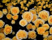 افتتاح معرض الزهور الملكى بعد عام من احتفال إليزابيث بعيد ميلادهاالـ90به