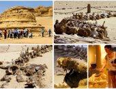 حفريات الحيتان بالفيوم شاهد على العصر