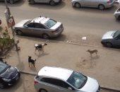 """شكوى من انتشار الكلاب الضالة بشارع """"بيروت"""" فى مصر الجديدة"""