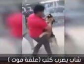 """بالفيديو..شاب يضرب كلب """"علقة موت""""..والرفق بالحيوان: يعذبوهم بالكرباج"""